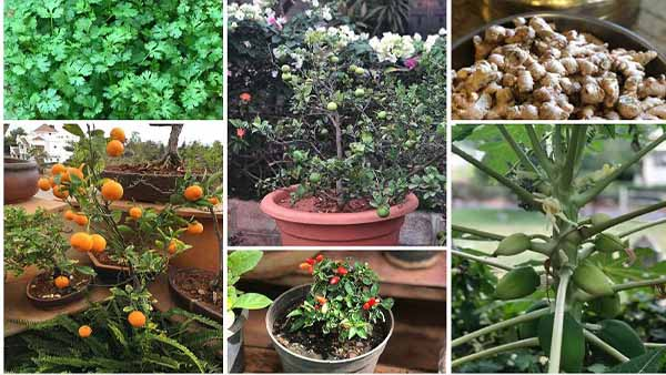kitchen garden: ચોમાસાની સીઝનમાં તમારા કિચન ગાર્ડનને કંઈક આ રીતે સજાવો…